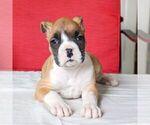 Small #3 Boxer