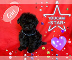 Small Photo #7 Maltese-Maltipoo Mix Puppy For Sale in SAN FRANCISCO, CA, USA