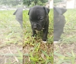 Small #3 Staffordshire Bull Terrier