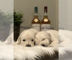 Image preview for Ad Listing. Nickname: Litter of 10