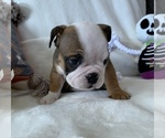 Small #4 English Bulldog
