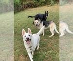 Small #670 German Shepherd Dog