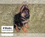 Small #4 German Shepherd Dog