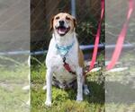Small #90 Beagle