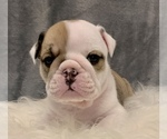Small #9 Bulldog
