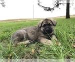 Small #58 German Shepherd Dog