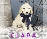 Image preview for Ad Listing. Nickname: Clara