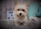 Mutt Puppy For Sale in FULLERTON, CA, USA