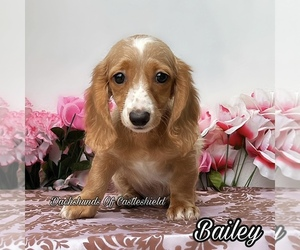 Dachshund Puppy for sale in MIAMI, FL, USA