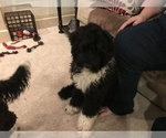 Small #5 Portuguese Water Dog