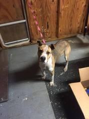 Drak - Needs Foster - Hound / Mixed (short coat) Dog For Adoption