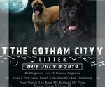 Image preview for Ad Listing. Nickname: Gotham city