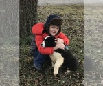 Small Photo #1 Australian Shepherd Puppy For Sale in ALLEGRE, KY, USA