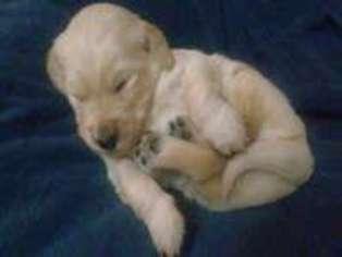 Ainu Dog Puppy for sale in NEW IBERIA, LA, USA