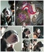 American Pit Bull Terrier Puppy For Sale near 63136, Saint Louis, MO, USA
