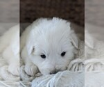 Small #41 Great Pyrenees