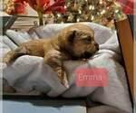 Puppy 3 Poo-Shi
