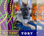 Image preview for Ad Listing. Nickname: TOBY