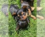 Image preview for Ad Listing. Nickname: Roxy Puppies