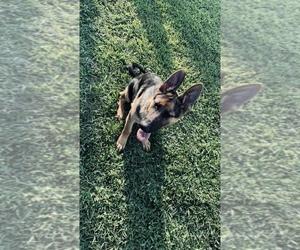 German Shepherd Dog Puppy for sale in LEX PK, MD, USA