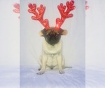Image preview for Ad Listing. Nickname: Male Fawns