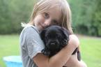 Labrador Retriever Puppy For Sale in VANCOUVER, WA, USA