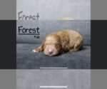 Image preview for Ad Listing. Nickname: Forest