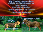 European Imported Champion Pedigree Pups NOW Here