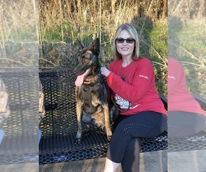 Mother of the Dutch Shepherd Dog puppies born on 03/15/2020