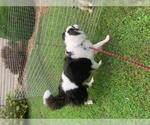 Small #18 Border Collie Mix