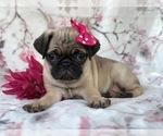 Small #19 Pug