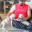 Small Photo #111 Dogo Argentino Puppy For Sale in PINEVILLE, MO, USA