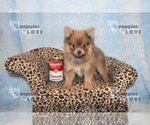 Image preview for Ad Listing. Nickname: CHEWIE