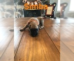 Image preview for Ad Listing. Nickname: Simba
