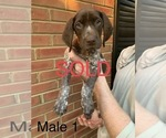 Small #24 German Shorthaired Pointer