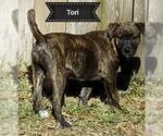 Small #134 Rottweiler Mix