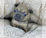 Image preview for Ad Listing. Nickname: Blue Sable boy