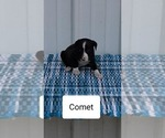 Image preview for Ad Listing. Nickname: Comet