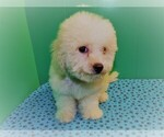 Image preview for Ad Listing. Nickname: peanut