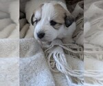 Small #90 Great Pyrenees
