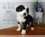 Image preview for Ad Listing. Nickname: Mr. Kona