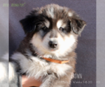 Image preview for Ad Listing. Nickname: Puppy #3 Brown