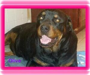 Mother of the Rottweiler puppies born on 02/27/2019