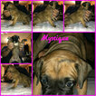 Boxer Puppy For Sale in BISMARCK, AR, USA