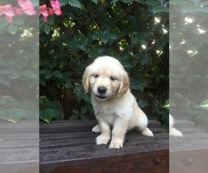 Puppies for Sale near Wichita, Kansas, USA, Page 1 (10 per