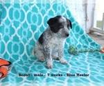 Small #3 Texas Heeler