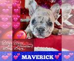 Image preview for Ad Listing. Nickname: MAVERICK