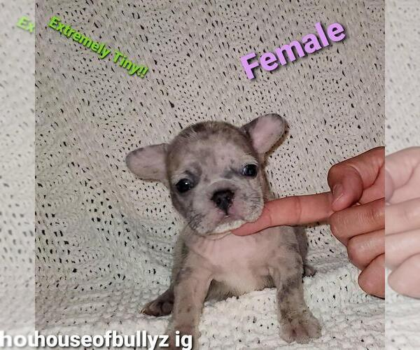 Full screen Photo #1 French Bulldog Puppy For Sale in N LAS VEGAS, NV, USA
