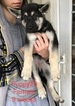 Small #11 German Shepherd Dog