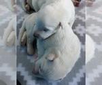 Small #13 German Shepherd Dog